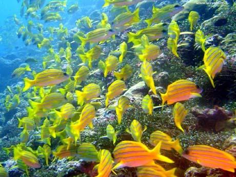 Malattie killer trasmesse da pesci tropicali viv voce for Sfondi pesci tropicali