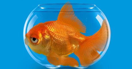 Viv voce part 2 for Dove comprare pesci rossi